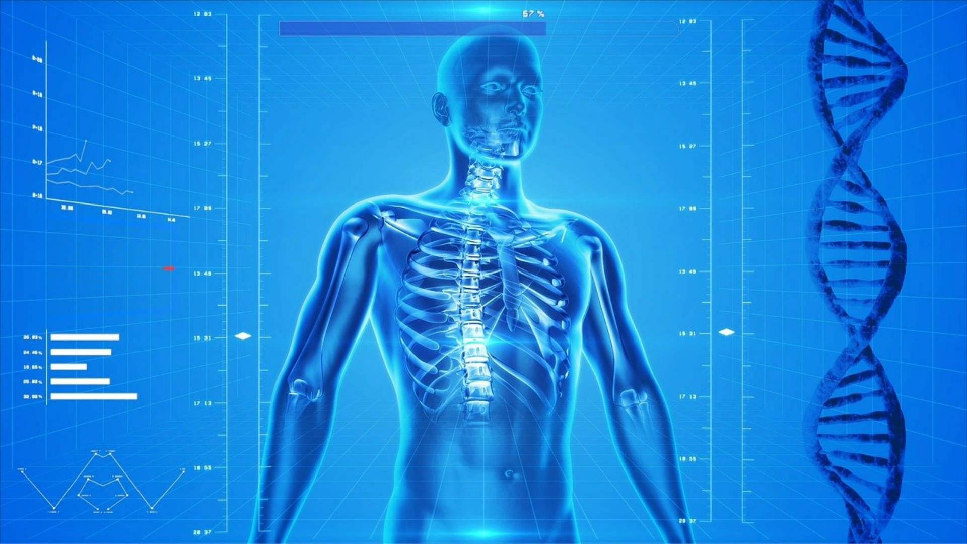 Anatomy, human skeleton